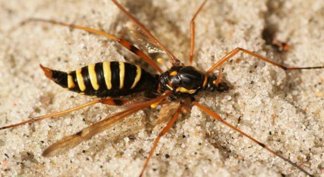 La Vesp'Araignée – Dimanche 15 novembre 2015